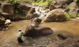 Elephants enjoying a bath in Kalaw, a wildlife sanctuary in Myanmar