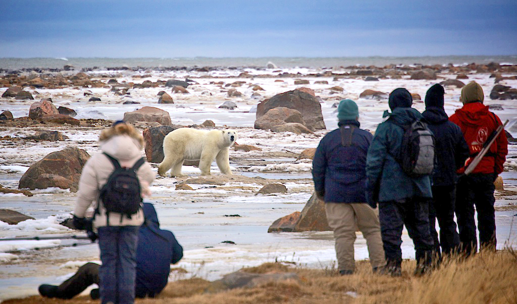 Seal River polar bear watching 090