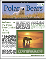 Polar bear brochure thumb