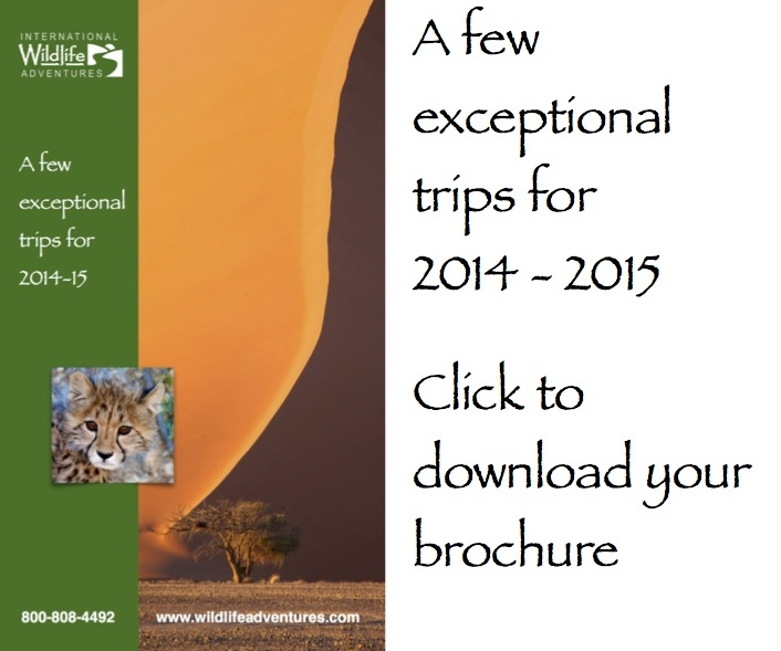 exceptional trips thumb with text brochure cover