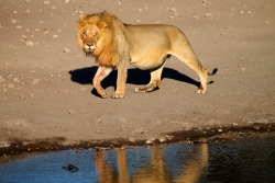 Namibia Tours and Safaris | Wildlife Nature Tours | Africa