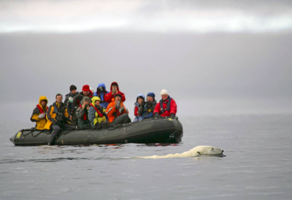 Swimming polar bear with Zodiac, Spitsbergen
