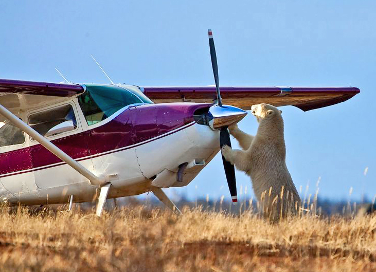 polar-bear-plane-Nanuk-Lodge-crop