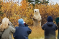 Nanuk Lodge Fall Polar Bear Photo Safari