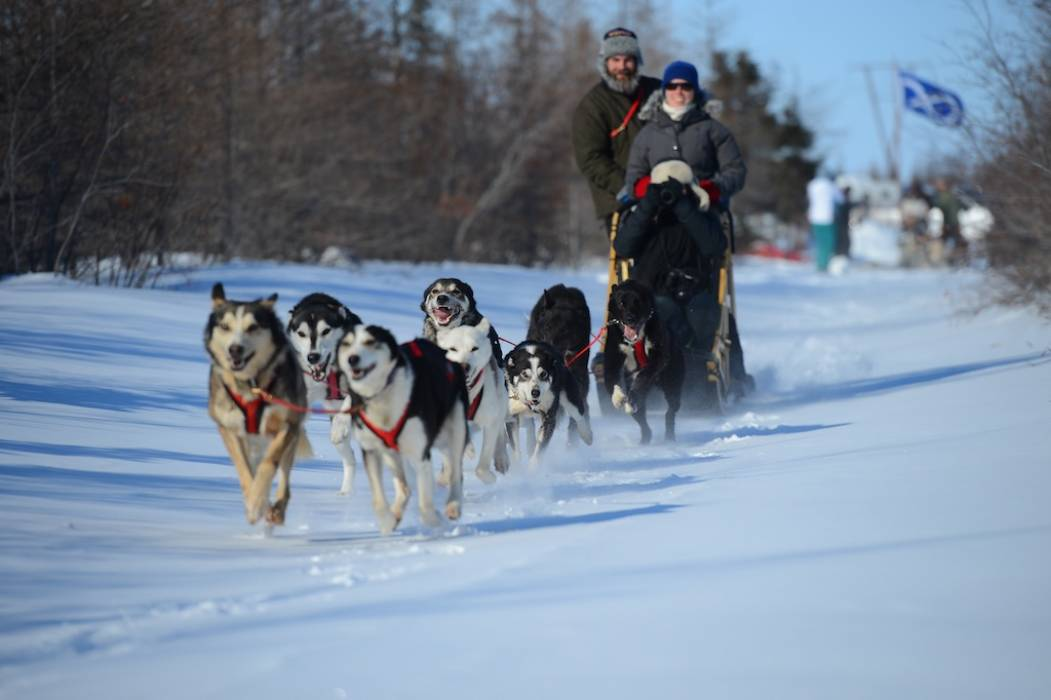 Dog Sledding - Dan Harper Photography-1